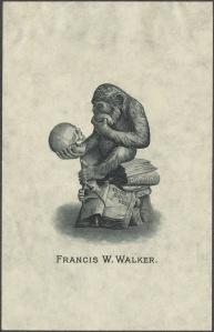 ape skull